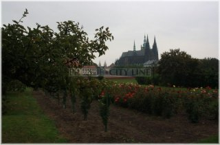 Prague castle - Production garden (also Lumbe garden)