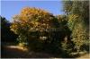 petrin-zahrada-kinskych101010_062