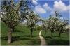 petrin_seminarska-zahrada110416_007