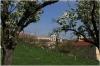 petrin_seminarska-zahrada110416_008