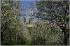 petrin_seminarska-zahrada110416_024
