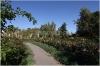 Petrin - The Rose Garden