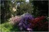 Botanical garden (botanická zahrada)