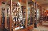 Hrdlicka Museum od Man (Hrdličkovo muzeum člověka)